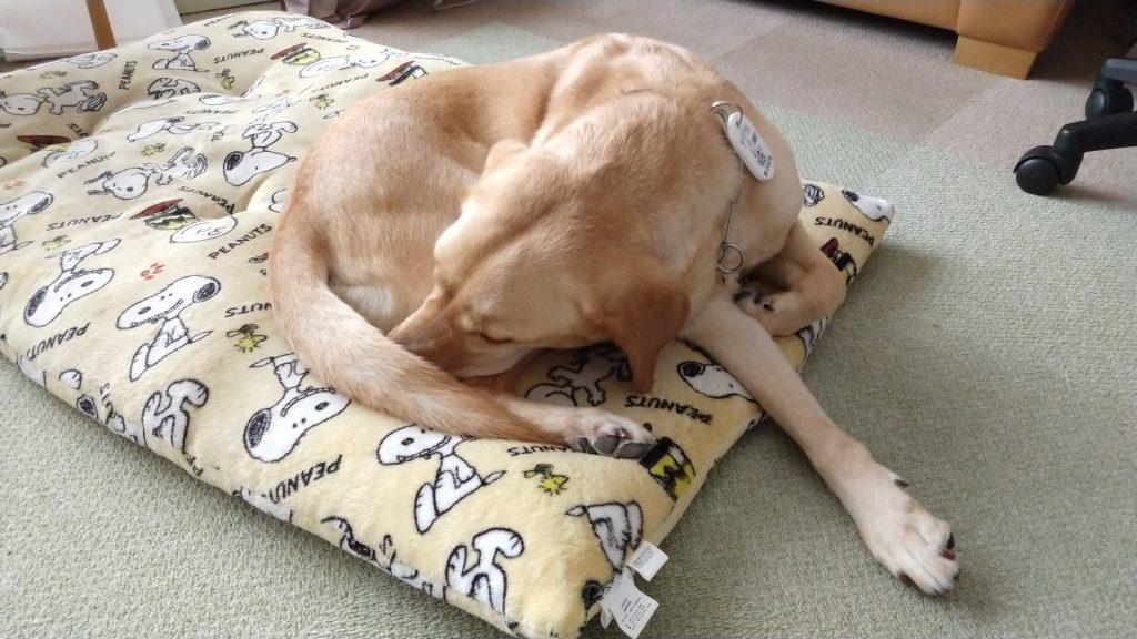 ふて寝する フーちゃんの写真