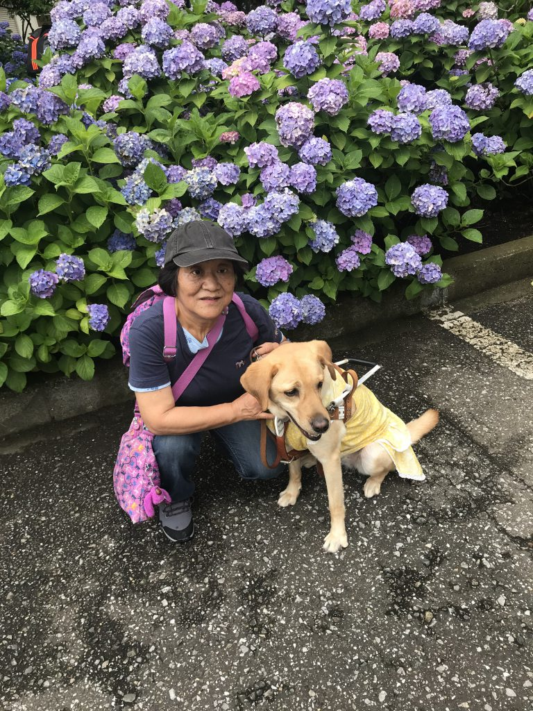 【写真】白山神社の紫陽花