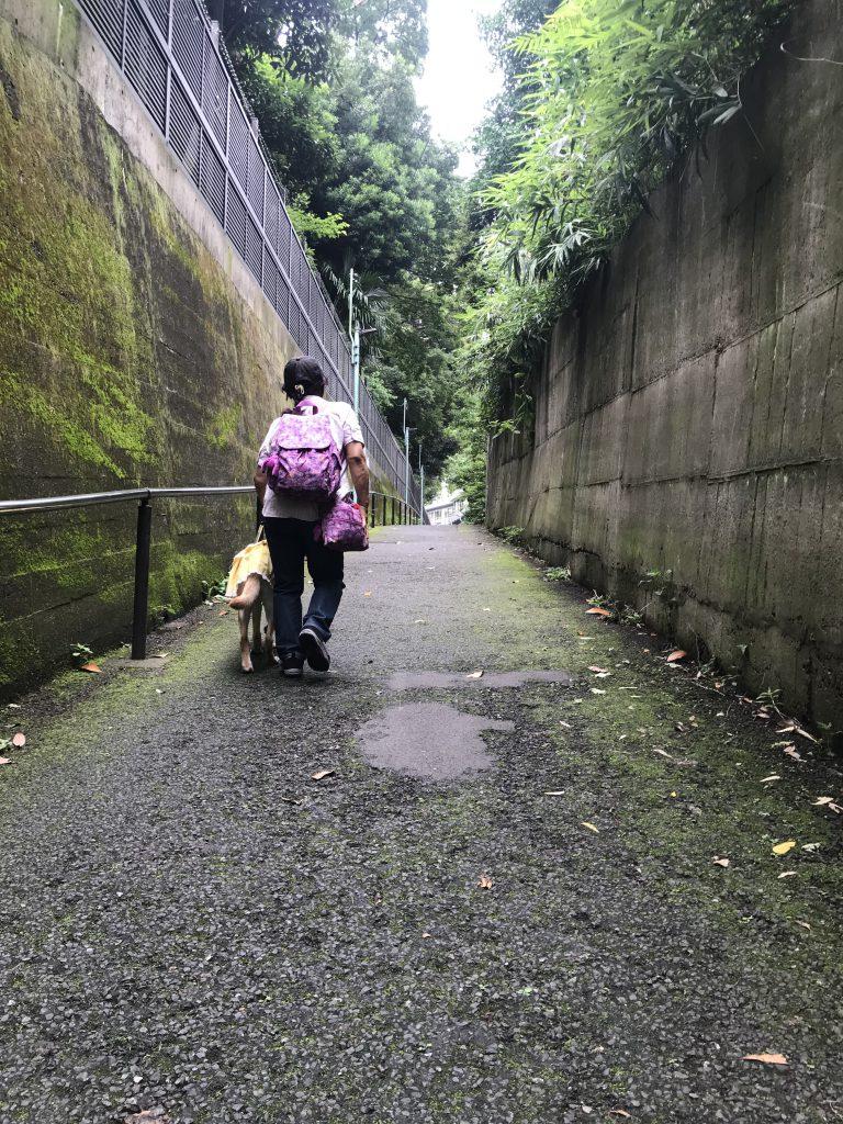 目白台運動公園脇 坂道を上る写真(後ろ姿)