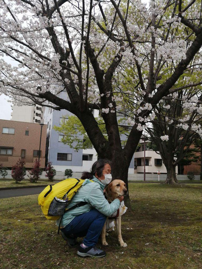 【写真】桜の前で(1)