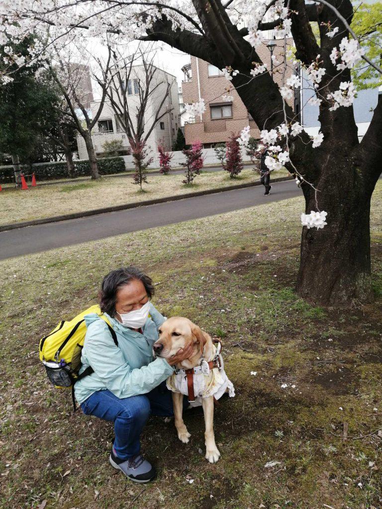 【写真】桜の前で(2)